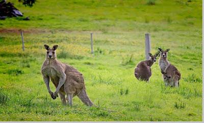 Ciri – Ciri Khas Negara Benua Australia