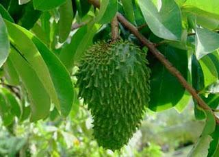 فاكهة القشطة ومرض السرطان