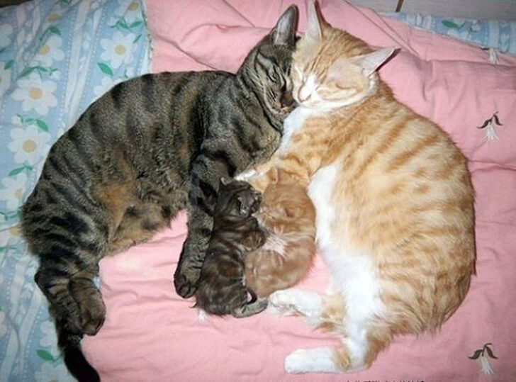 20 Heart-Melting Pictures Of Furry Moms With Their Babies