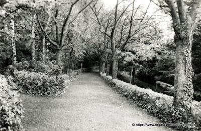 Vue de Royat, hier,  noir et blanc Royat, une allée du parc Bargoin.