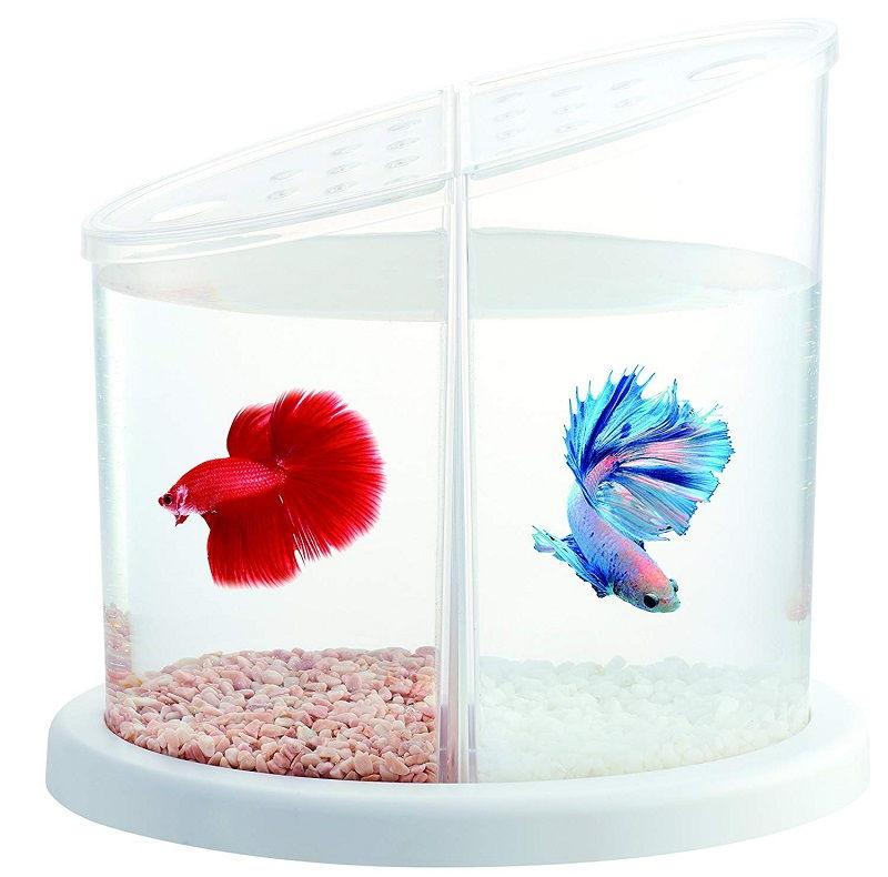 Betta Fish Tank Setup cups