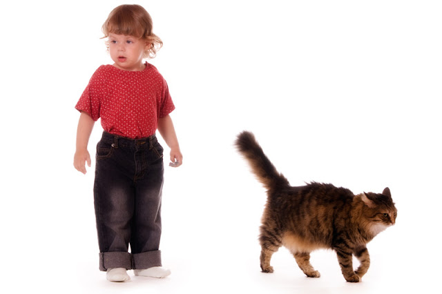 A cat choose to walk away from a small child