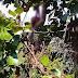 Derita Penyakit Syaraf, Warga Cipedes Ditemukan Tewas Tergantung di Pohon