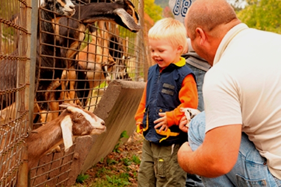 Animal-to-Human Diseases at Fairs and Zoos