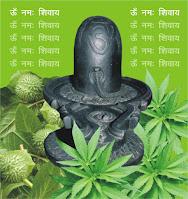 हरियाली तीज सौभाग्य का प्रतीक- Haritalika Teej is a symbol of good fortune