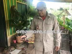 Bombeiros retiraram ninhada de jacarés no quintal de uma residência no bairro São José