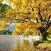 28 lời khuyên về cuộc sống cực thâm thúy của người Nhật