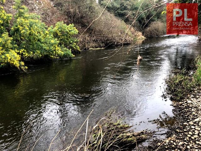 Pedirán permiso para limpiar el río Damas