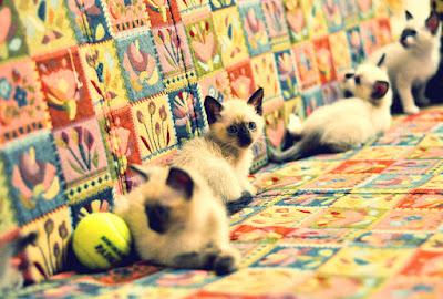 Cute Cats Kitty Pets 10