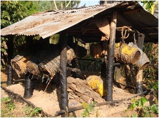 Μελισσοκομία και παραγωγή μελιού στην Αιθιοπία
