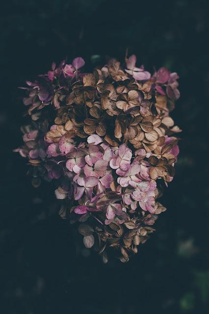 اجمل الورود الخلفيات للجوال 19