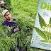 PANORAMA / Colombia se convierte en referente mundial para la producción industrial de cannabis