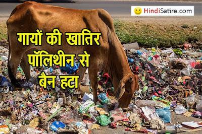Madhya Pradesh gau-cabinet , Polythene ban removed in mp, satire, मप्र गो कैबिनेट, गो भक्त सरकार, व्यंग्य