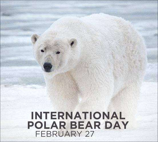 International Polar Bear Day Wishes pics free download