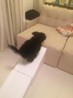 rampa para cães ágeis
