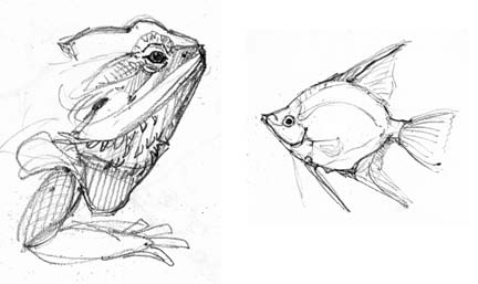 how to draw a baby bearded dragon