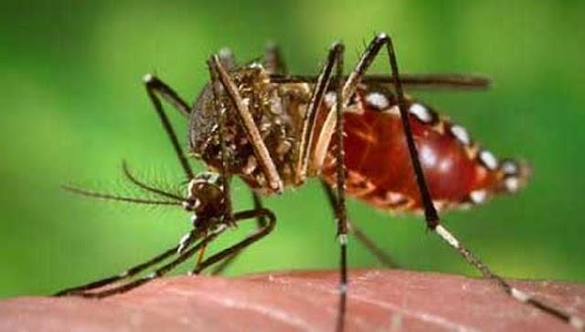 शहर में डेंगू का प्रकोप, सप्ताहभर के भीतर 16 नए मामले आए सामने - Rewa News