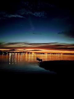 Moose Silhouette, Sydney Harbour