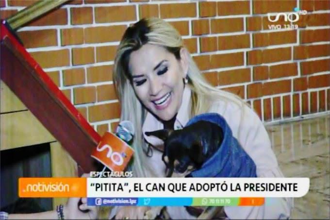 La hermosa Presidenta de Bolivia y su amor por los animalitos de la calle