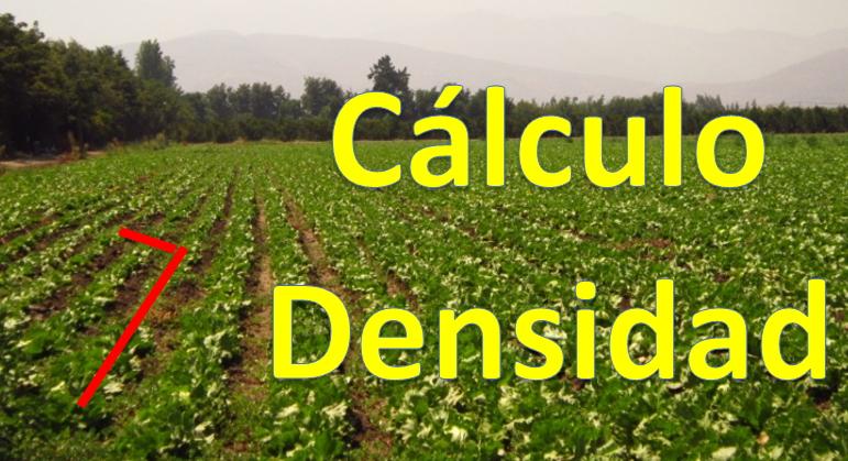 Planeta agron mico c mo extraer densidades de siembra y for Densidad de siembra de tilapia