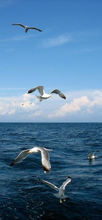 Океан - символ владычества и смирения