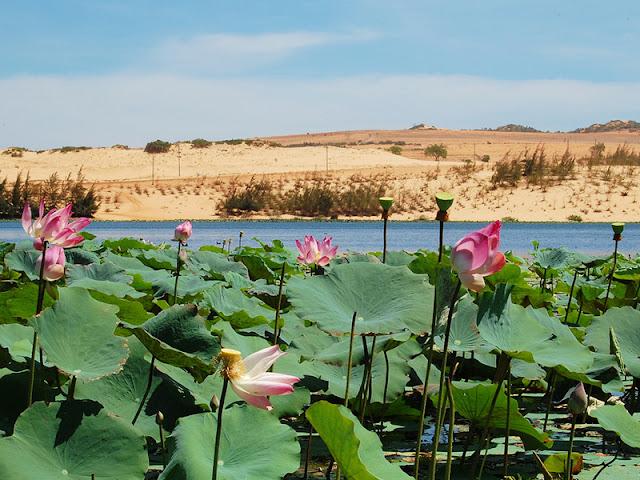 Bau Sen – An oasis in Mui Ne's sand dunes 3