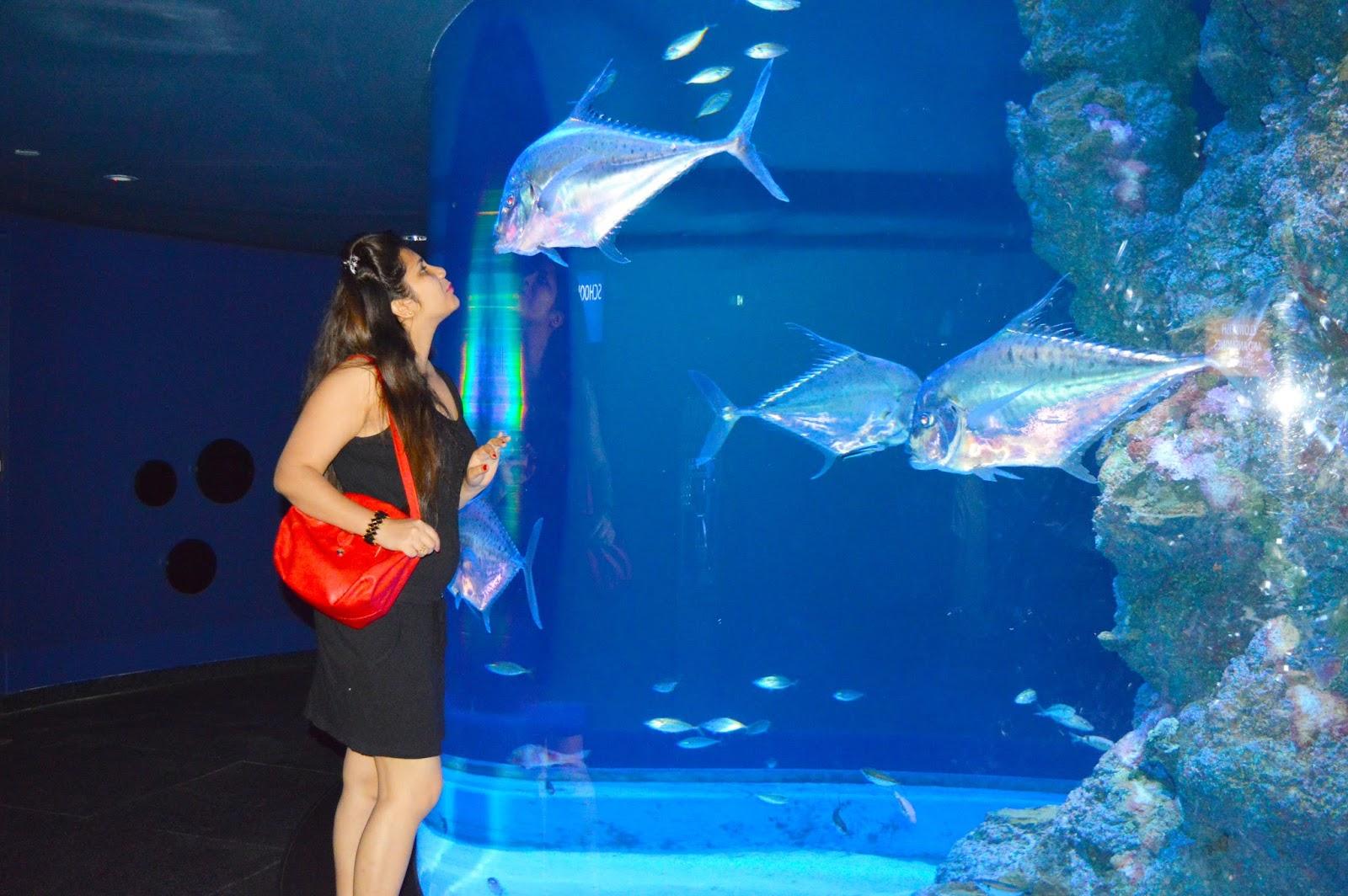 Nitsa Know Your New Self At Sentosa Island Along With Universal Tiket Madame Tussauds Singapore Varied Sea Life Aquarium