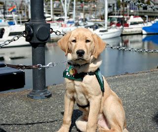 Correct any kind of upsetting behavior with dog training collars