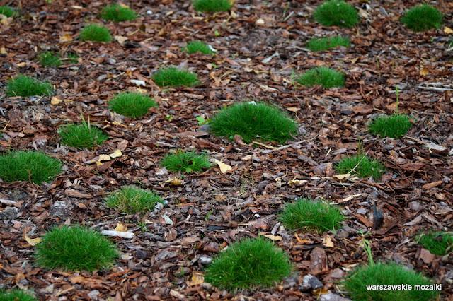 Ursynów teren zielony parki warszawskie rzeźba Warszawa Warsaw