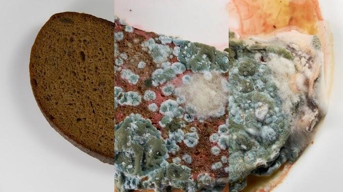 Esto es lo que pasa cuando dejas dos semanas una rebanada de pan en agua... ASCAZO HIPNOTIZADOR.