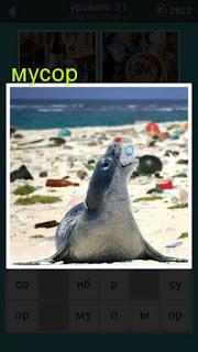 весь берег усыпан мусором среди которого тюлень в рот взял банку