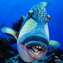 أغرب المخلوقات البحرية ، الزناد ، سمك الزناد