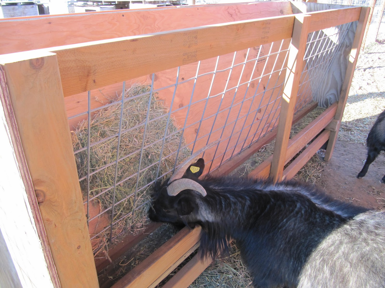 No Waste Goat Hay Feeders