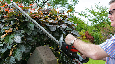 Best Hedge Trimmer for Thinning Branches