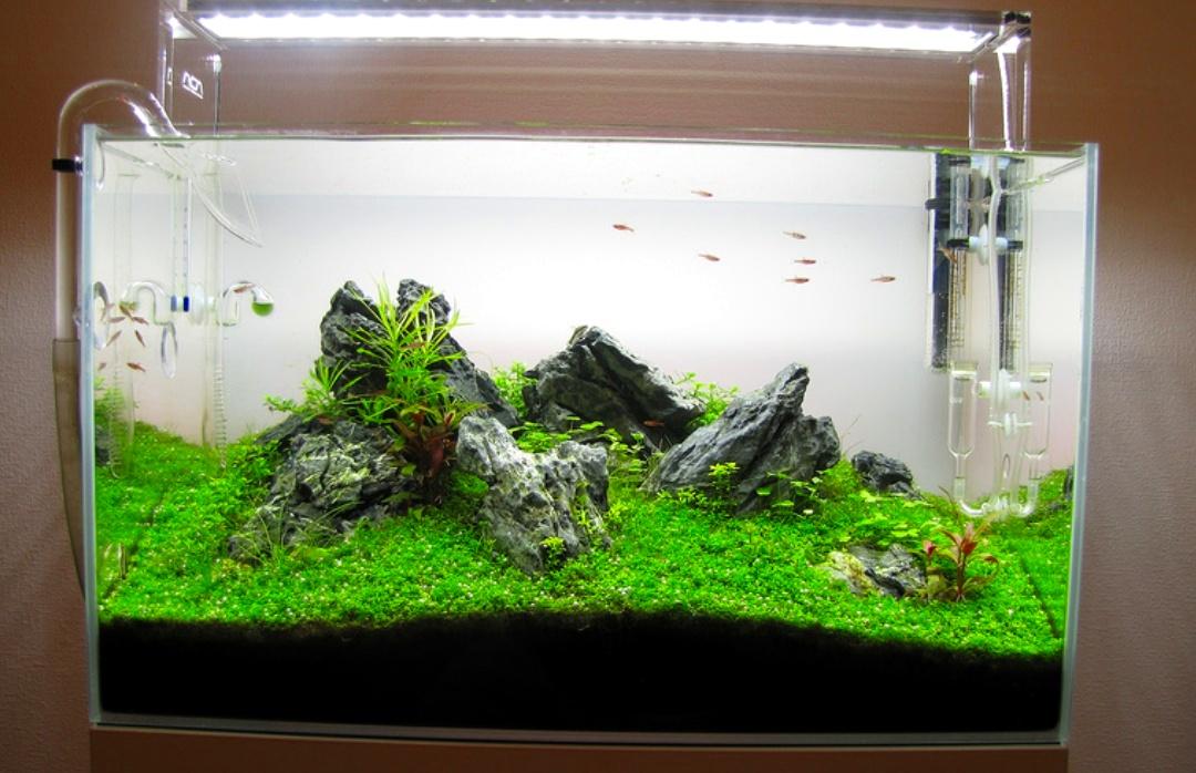 86+ Ide Desain Aquascape Aquarium Kecil HD Paling Keren Untuk Di Contoh