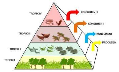 Gambar Piramida ekologi - Sumber: satujam.com
