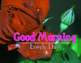 New Good Morning 4k Full HD Images Download For Daily%2B14