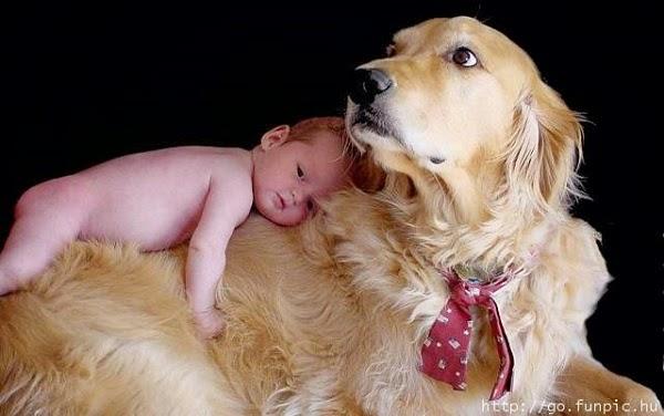 Photo Bébé mimi avec Chien