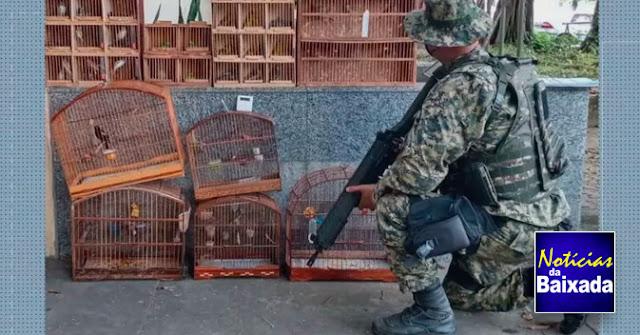 PMs resgatam 158 pássaros que seriam vendidos ilegalmente no Rio e na Baixada Fluminense