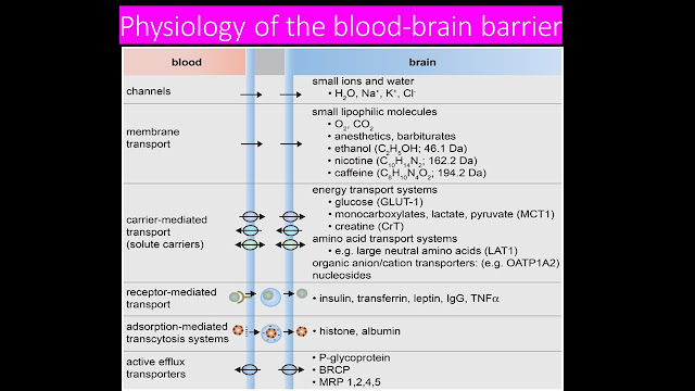 Anatomy and Physiology of Blood Brain Barrier