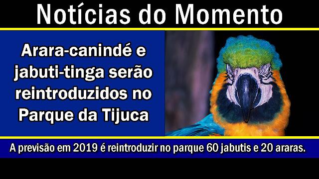 Arara-canindé e jabuti-tinga serão reintroduzidos no Parque da Tijuca.