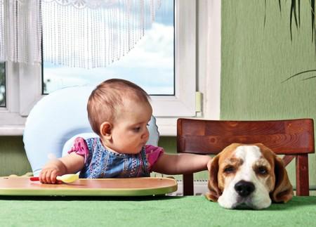 bebé perro