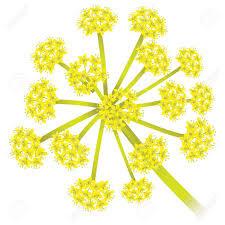 ferula-fodetida plant
