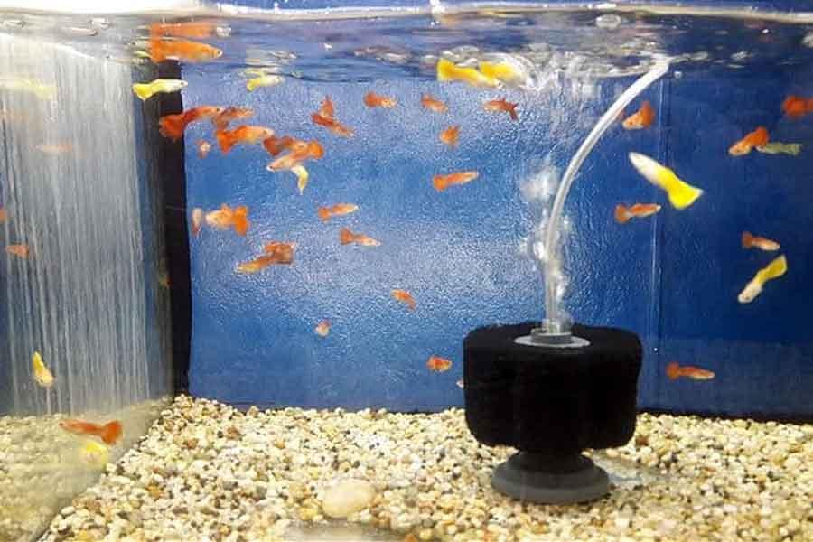 Berbagai Macam Merk Filter Kolam Ikan