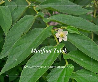 Bunga tanaman Talok