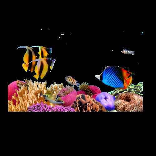 Marine biology Sea Underwater Algae, sea, coral, seaweed png by: pngkh.com