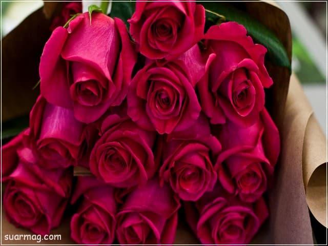 صور ورد - خلفيات ورد 4 | Flowers Photos - Roses wallpapers 4