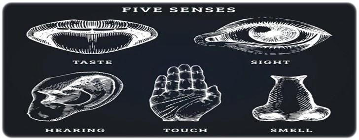 İnsan Duyuları 5 Tane İle Sınırlı Değil Mi?