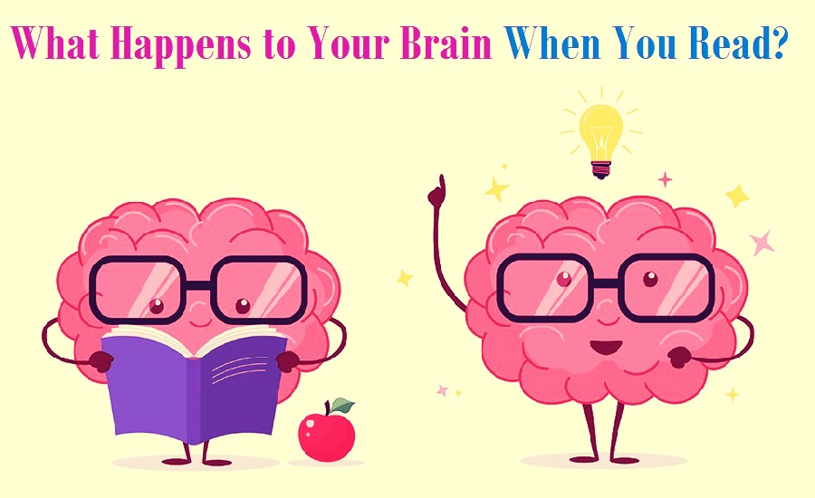 Your Brain When You Read