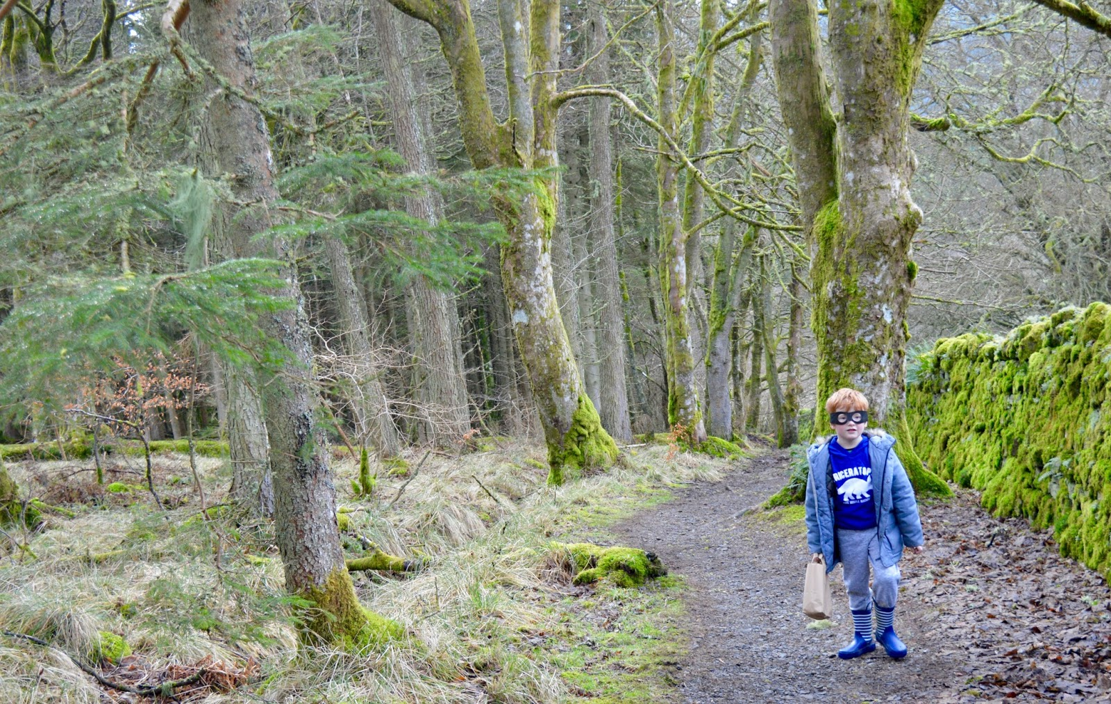 10 of the best family walks in North East England with a cafe and play park nearby - Kielder Forest